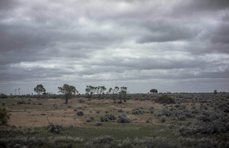 Landscape, Goyder Highway