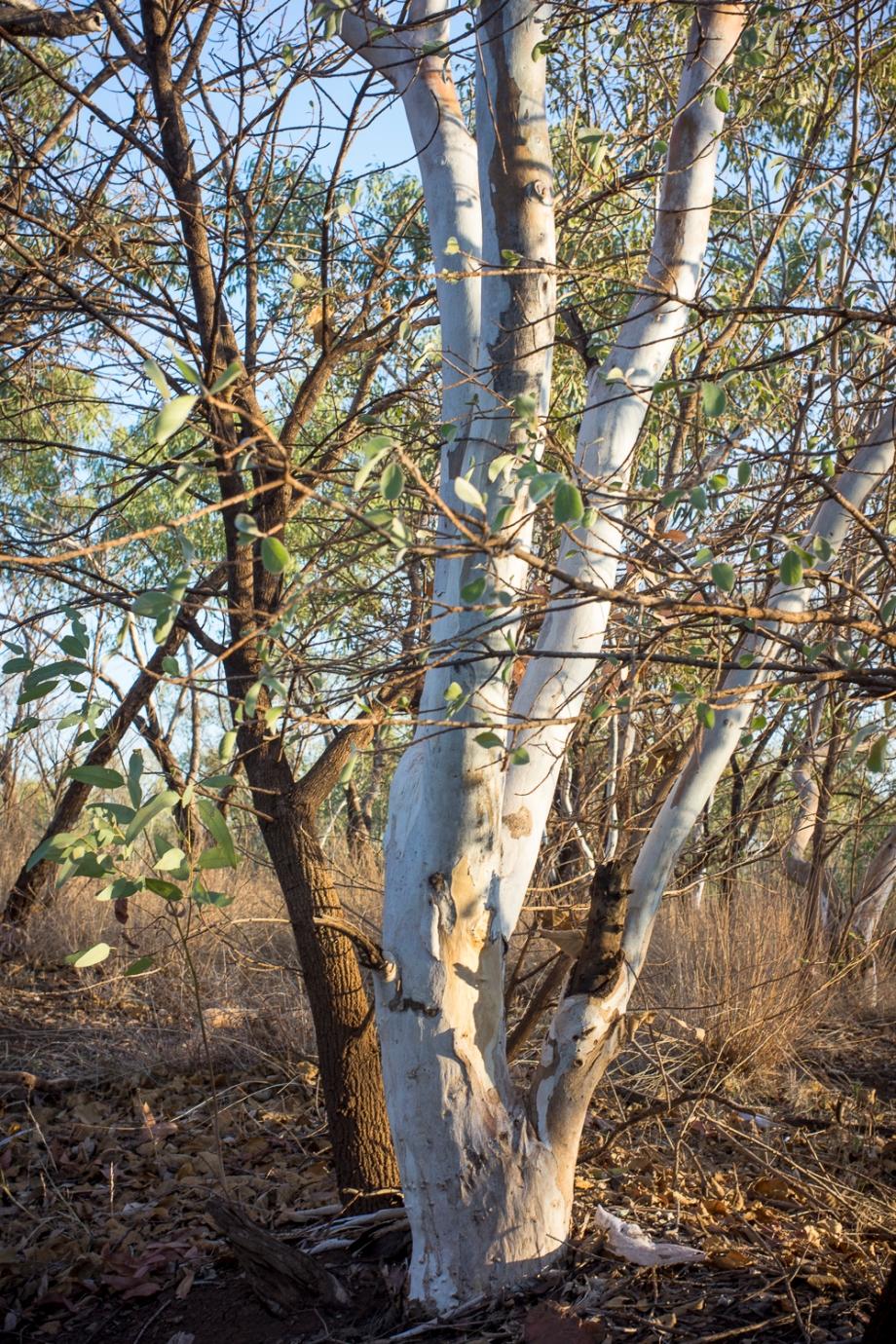 trees, Hooker Creek