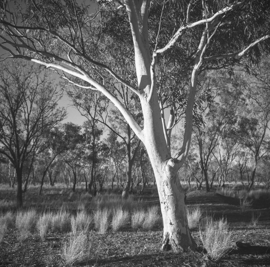 Lajamanu landscape#2